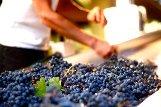 Duckhorn  Winery