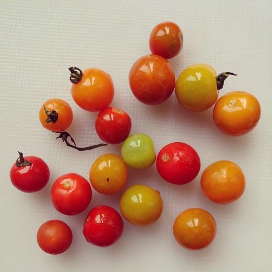 Kolorowo pomidorowo