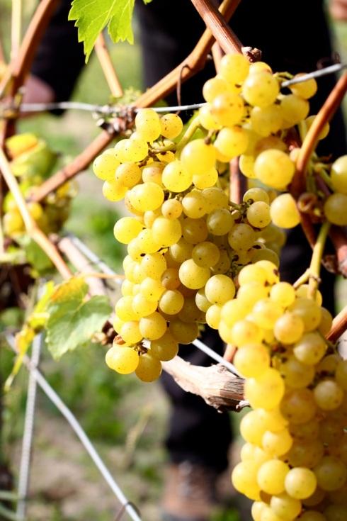 Winnica Mierzęcin