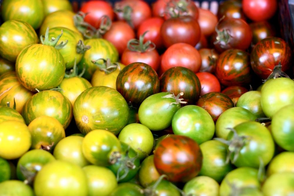 Pomidory od Marszałków